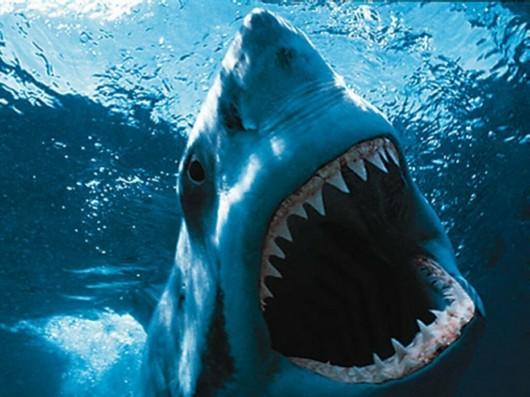 Taking a Bite at the Shark Bite