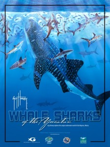 Whale Sharks of the Yucatán: A Guy Harvey Expedition
