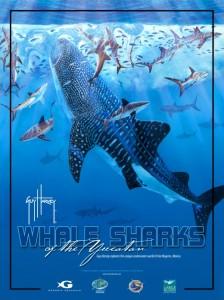 Whale Sharks of the Yucatán: A Guy Harvey Expedition