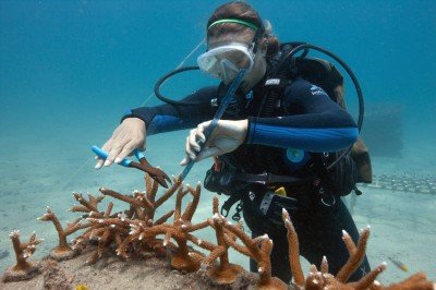 Workin With Staghorn Coral