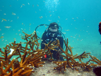 Coral Nursery data collection