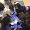 Seventh-grade students in hands-on learning and activities