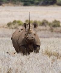 Rhino photo 2