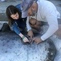 David Kerstetter and Sarah Gumbleton collecting parasite specimens from the sharptail mola near the pectoral fin.